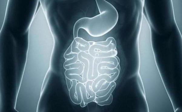 Тонкая кишка и ее отделы: описание, функции и заболевания