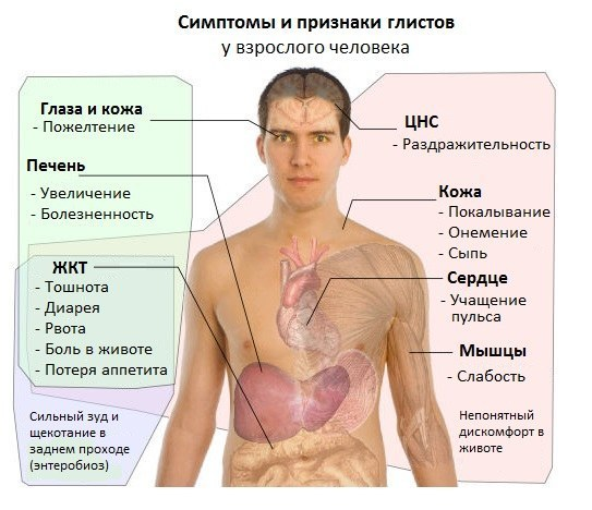 Глистная инвазия у взрослых: симптомы и лечение (препараты, питание…)