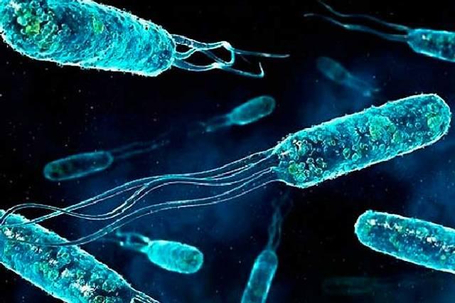 Энтерококки: что это, нужно ли лечить бактерию?