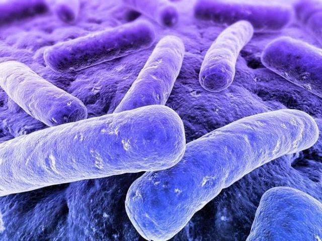 Лактобактерии кишечника: список препаратов и продуктов