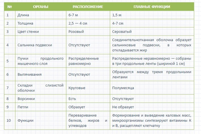 Функции кишечника человека и его основных отделов