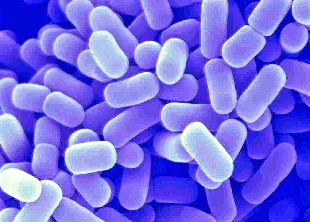 Бифидобактерии и лактобактерии: их разница, список препаратов и продуктов