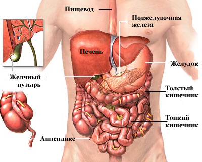 Спазм внизу живота слева у женщин