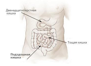 Подвздошная кишка: расположение, строение, фукнции и заболевания