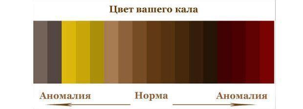 Состав кала человека и другие характеристики (цвет, консистенция)