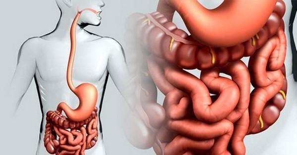 Тонкая кишка: строение и функции органа