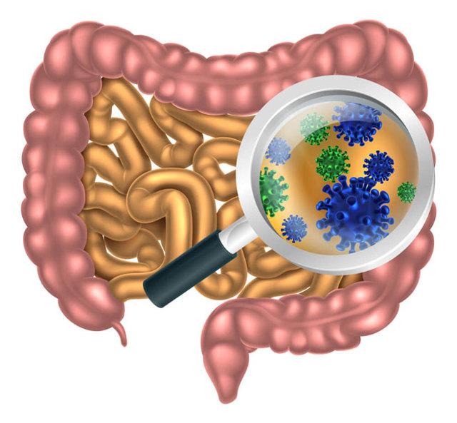 Как кишечник влияет на иммунитет человека?