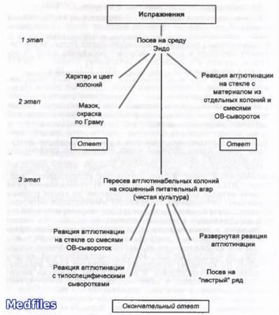 Бактерии группы кишечной палочки: виды и особенности возбудителя