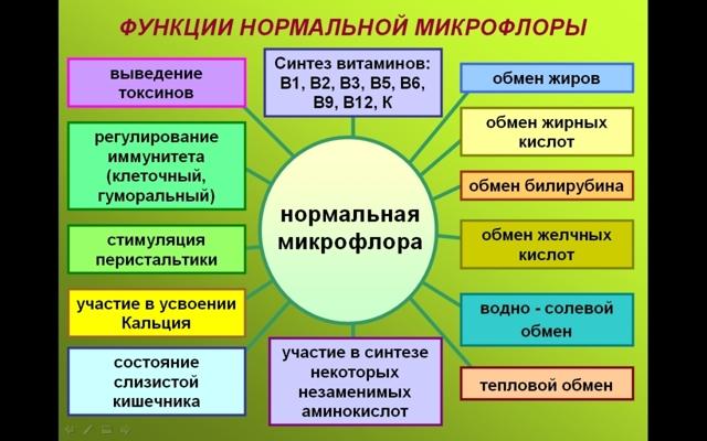 Подробно о микрофлоре кишечника человека и ее функциях