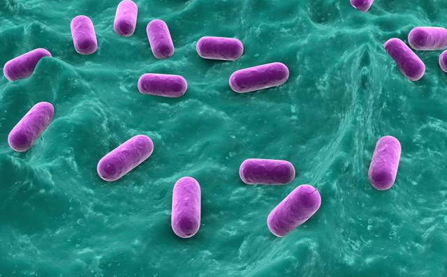 Анализ кала на дисбактериоз: подготовка и расшифровка анализа