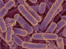 Как бактерии кишечника влияют на иммунитет?