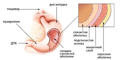 Где начинается процесс пищеварения у человека?