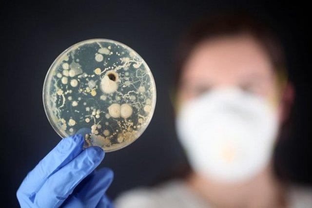 Условно-патогенные бактерии кишечной микрофлоры, их виды и функции