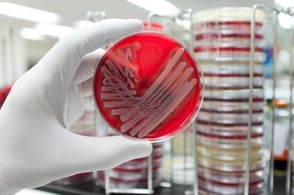 Условно-патогенные энтеробактерии в кале у ребенка: опасность и лечение