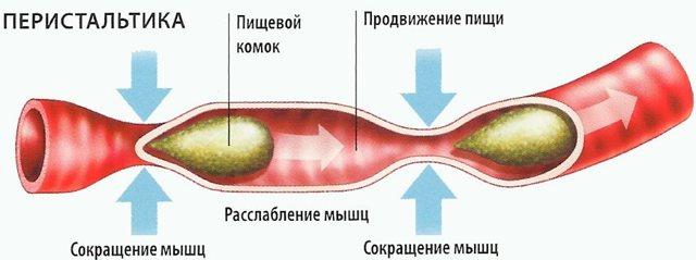 Продукты, улучшающие перистальтику кишечника