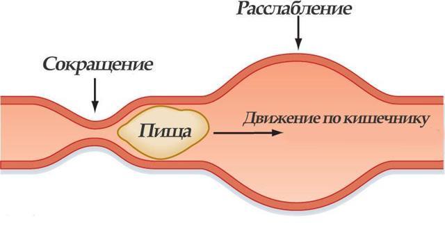 Как улучшить перистальтику кишечника при запорах