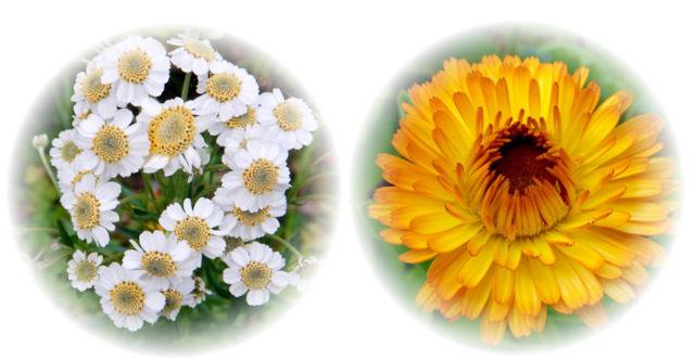 Травы для лечения желудка и их использование при разных болезнях