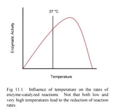 Какой температуры должна быть принимаемая пища?