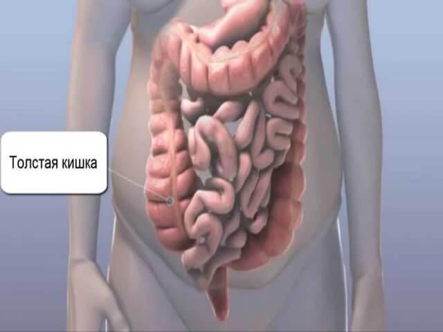 Толстый кишечник: строение и функции органа