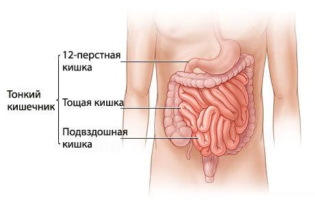 Аутоиммунные заболевания кишечника: симптомы и список патологий
