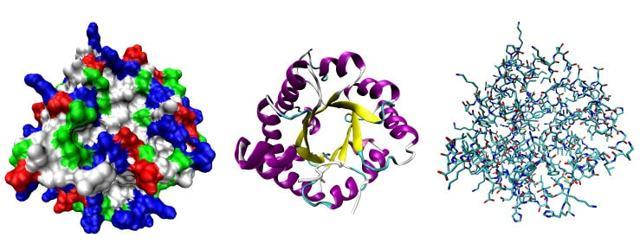 Пищеварительные ферменты человека: виды, функции, норма и патология