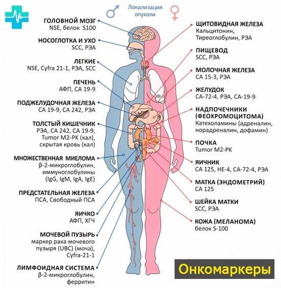 Онкомаркеры кишечника: список, анализ и его расшифровка