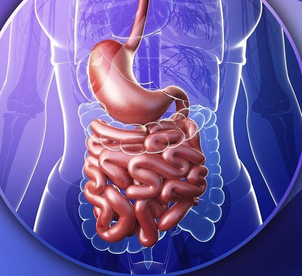 Сфинктер Одди: расположение, функции и заболевания структуры