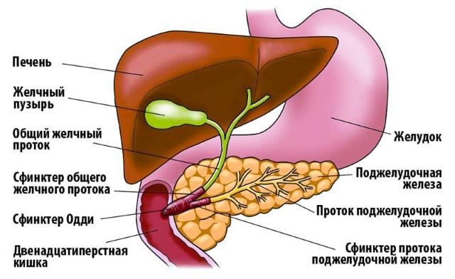 Дисфункция сфинктера Одди: типы, симптомы и лечение (питание, медикаменты)