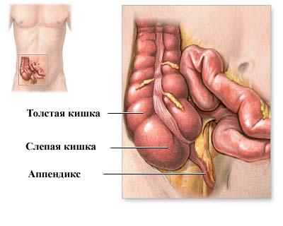 Аппендицит: симптомы патологии, диагностика и лечение + FAQ