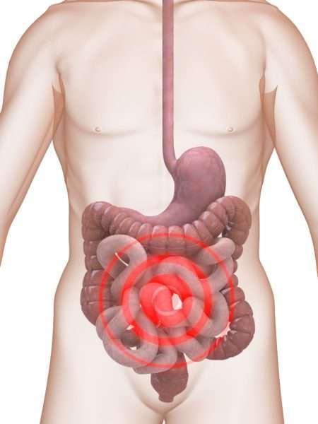 Перистальтика кишечника: патологии и методы улучшения сокращений стенок