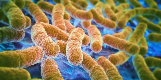 Интересные факты о микрофлоре кишечника