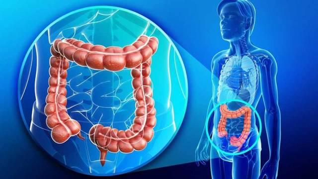 Патогенные бактерии кишечной микрофлоры и их влияние на здоровье