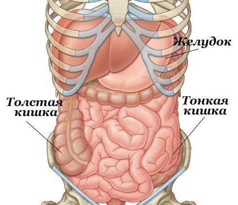 Как проверить тонкий кишечник на наличие заболеваний?