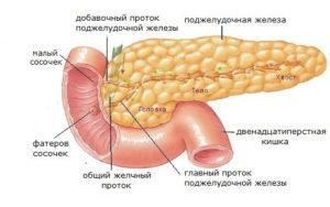 Большой дуоденальный (фатеров) сосочек: функции и заболевания анатомической структуры