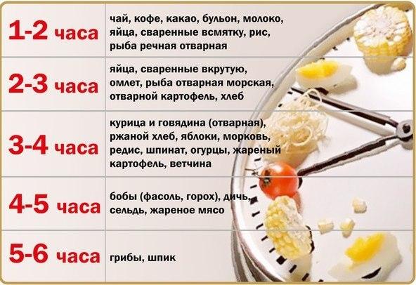Сколько времени переваривается пища в желудке человека?