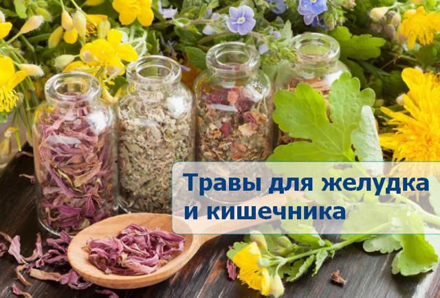 Травы для кишечника: когда и какие использовать для лечения ЖКТ