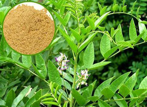 Слабительные травы при запорах у взрослых: растения, сборы и препараты на их основе