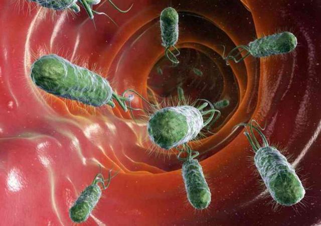Толстый кишечник и его отделы: описание, функции и заболевания