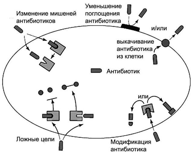 Антибиотики и их применение для лечения кишечных инфекций