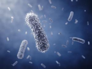 Бифидо- и лактобактерии в одном препарате: список лекарств
