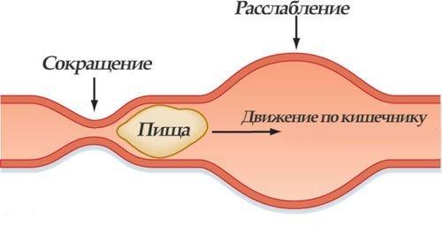 Моторика кишечника: варианты нормы и нарушения, лечение