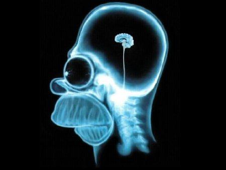 Где содержится самое большое количество нервных окончаний у человека?