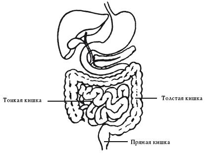 Рак кишечника: симптомы, лечение и прогноз для жизни