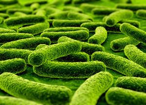 Пробиотики для кишечника: понятие, виды и список препаратов