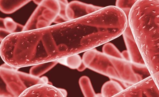 Клебсиелла в кишечнике: симптомы и принципы лечения бактерии